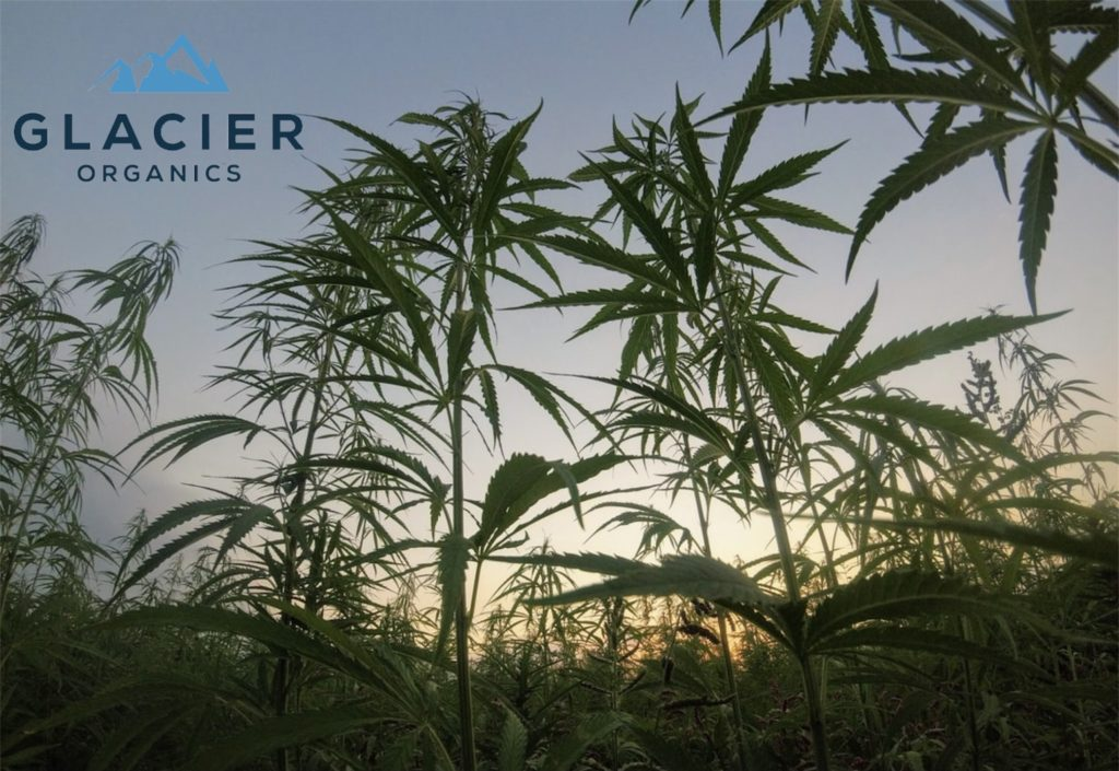 CBD Terminology Guide For Beginners